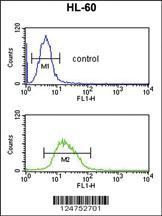 Anti-RNH2C Rabbit Polyclonal Antibody