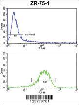 Anti-ENTPD2 Rabbit Polyclonal Antibody